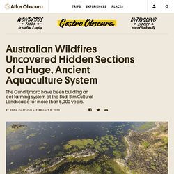 Australian Wildfires Uncovered Hidden Sections of a Huge, Ancient Aquaculture System - Gastro Obscura