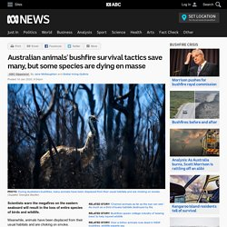 Australian animals' bushfire survival tactics save many, but some species are dying en masse
