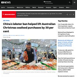 China's lobster ban helped lift Australian Christmas seafood purchases by 30 per cent