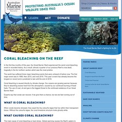 Coral Bleaching on the Reef · Great Barrier Reef · Australian Marine Conservation Society