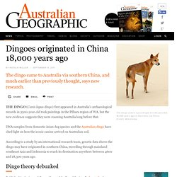 The dingo is originally from southern China