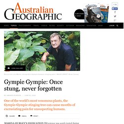 Gympie Gympie: Once stung, never forgotten