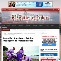 TNTRIBUNE 30/03/21 Australian State Wants Artificial Intelligence To Protect Its Bees