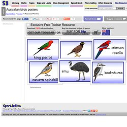 Australian birds posters (SB9688