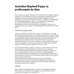 Australian Shepherd Puppy: Le profil complet du chien