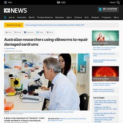 Australian researchers using silkworms to repair damaged eardrums