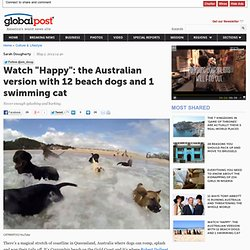 """Watch """"Happy"""": the Australian version with 12 beach dogs and 1 swimming cat"""