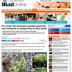 It's a trap! The Australian sundew plant that uses tentacles to catapult its prey to their death