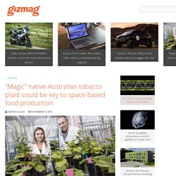 """Magic"" native Australian tobacco plant could be key to space-based food production"