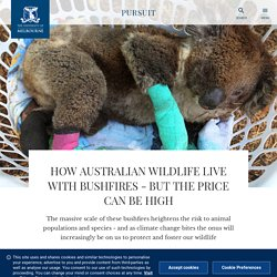 How Australian wildlife live with bushfires - but the price can be high