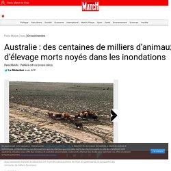 Australie : des centaines de milliers d'animaux d'élevage morts noyés dans les inondations