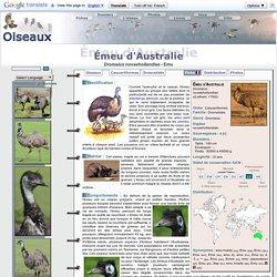 Émeu d'Australie - Dromaius novaehollandiae - Emu