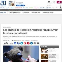 Les photos de koalas en Australie font pleuvoir les dons sur Internet