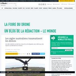 Les aigles australiens traumatisent les drones
