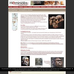 Australopitheque Afarensis - Lucy - Ancêtres