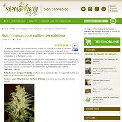 Autofloraison pour cultiver en extérieur - Piensa en verdePiensa en verde