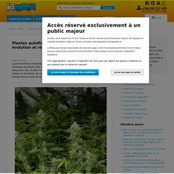 Plantes autoflorissantes de cannabis, évolution et révolution