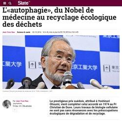 L'«autophagie», du Nobel de médecine au recyclage écologique des déchets