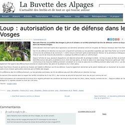Loup : autorisation de tir de défense dans les Vosges
