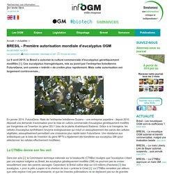 BRESIL - Première autorisation mondiale d'eucalyptus OGM