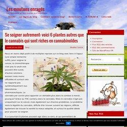 Se soigner autrement: voici 6 plantes autres que le cannabis qui sont riches en cannabinoïdes – Les moutons enragés