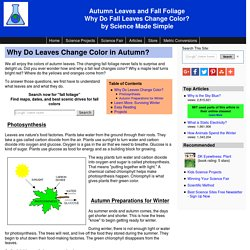 Autumn Leaves and Fall Colors - Why do autumn leaves change color?