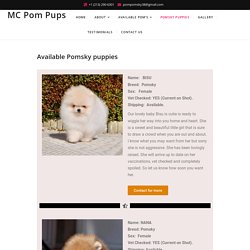 Available Beautiful Mini Pomsky Puppies for Sale USA - MC Pom Pups