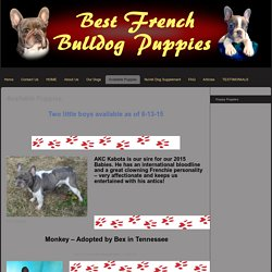 Best French Bulldog Puppies