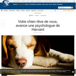 Votre chien rêve de vous, avance une psychologue de Harvard