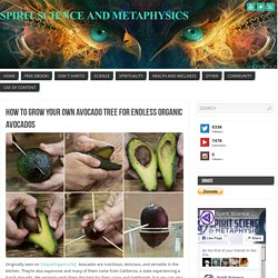 How To Grow Your Own Avocado Tree For Endless Organic Avocados