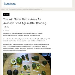 You Will Never Throw Away An Avocado Seed Again After Reading This - Trendfrenzy