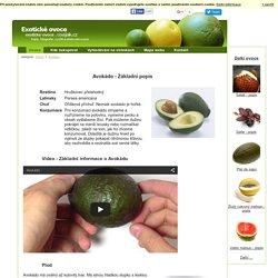 Avokádo - Základní popis - Exotické ovoce