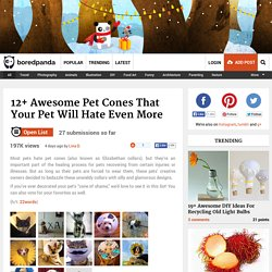 12+ Awesome Pet Cones That Your Pet Will Hate Even More