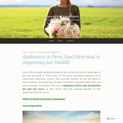 Ayahuasca in Peru: Soul Herb that is improving our Health! – Ayahuasca Ceremonies