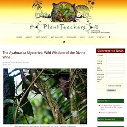 The Ayahuasca Mysteries: Wild Wisdom of the Divine Wine
