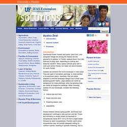 Azalea Zeal - UF/IFAS Extension: Solutions for Your Life