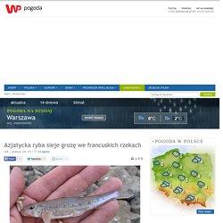 Azjatycka ryba sieje grozę we francuskich rzekach