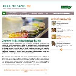 BIOFERTILISANTS - Zoom sur les bactéries fixatrices d'azote.