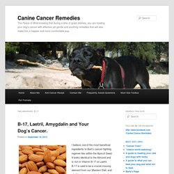 Canine Cancer Remedies