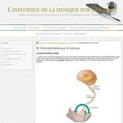 B/ L'interprétation par le cerveau