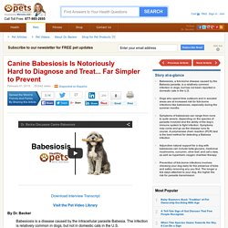 Canine Babesiosis: Symptoms & Diagnosis of a Babesia Infection
