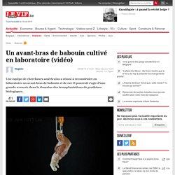 Un avant-bras de babouin cultivé en laboratoire (vidéo) - Sciences