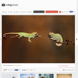 baby chameleons photo | one big photo - StumbleUpon