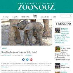 "Baby Elephants are ""Awwww""fully Cute!"