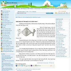 www.bachkhoatrithuc.vn - Động mạch và tĩnh mạch có gì khác nhau?,