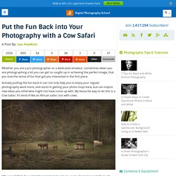Put the Fun Back into Your Photography with a Cow Safari