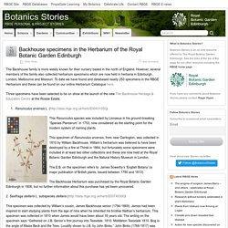 Backhouse specimens in the Herbarium of the Royal Botanic Garden Edinburgh – Botanics Stories