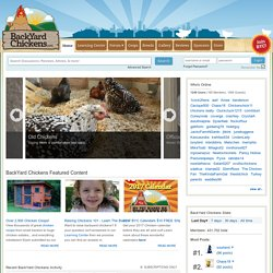 Raising BackYard Chickens, Build a Chicken Coop, Pictures of Breeds