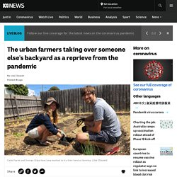 The urban farmers taking over someone else's backyard as a reprieve from the pandemic