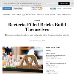 Bacteria-Filled Bricks Build Themselves